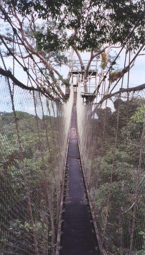 Canopy walk near the ACTS Field Station - Amazon jungle Peru & walk near the ACTS Field Station - Amazon jungle Peru