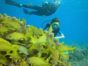 Scuba diving around Guam island